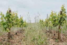Le Vignoble Marchais
